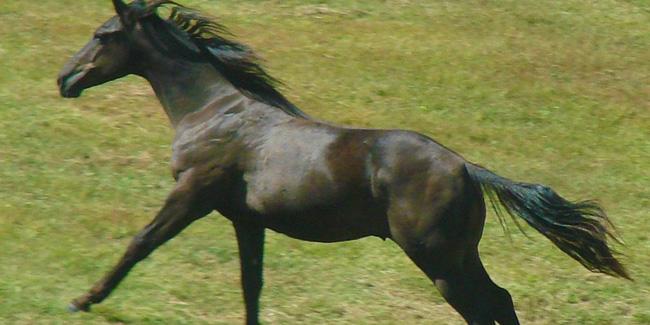 27 05 2013 konie