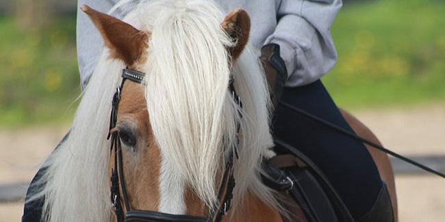 22 06 2015 konie