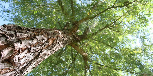 23 11 2015 drzewa