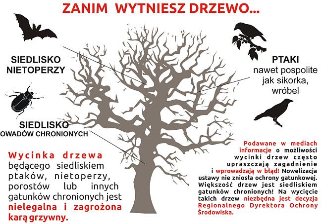 24 02 2017 drzewa2