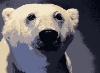 23 02 2017 polar