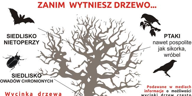 24 02 2017 drzewa1