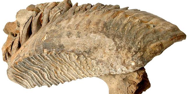 28 03 2017 mamut1