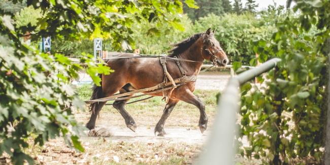 27 09 2019 wystawa koni
